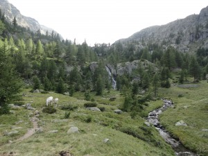 Tussen de bergkoeien nog even genieten van het relatief vlakke. Vanaf nu begint het zware werk.